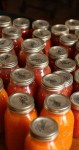 How To Can Your Own Tomatoes – Canning tomatoes is not all that hard. In a few simple steps, you can enjoy your homegrown tomatoes, months after the growing season is over!